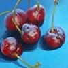 Gang of Cherries