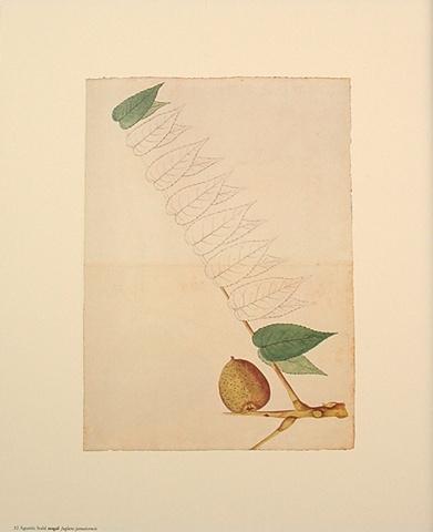 Stahl, Agustín. 1458ff