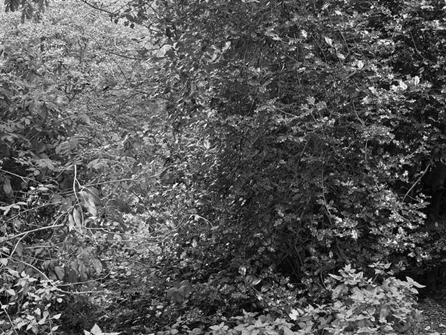 Hampstead Heath, imgp3010-2