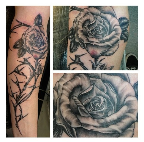 sharp rose