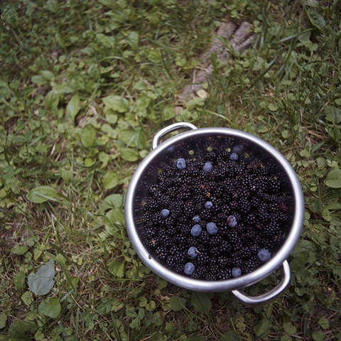 Blackberries Waynesville, NC