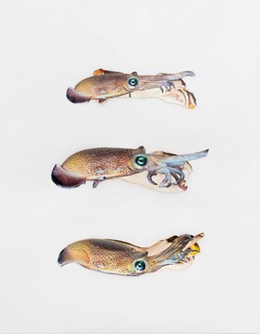 Three Squid