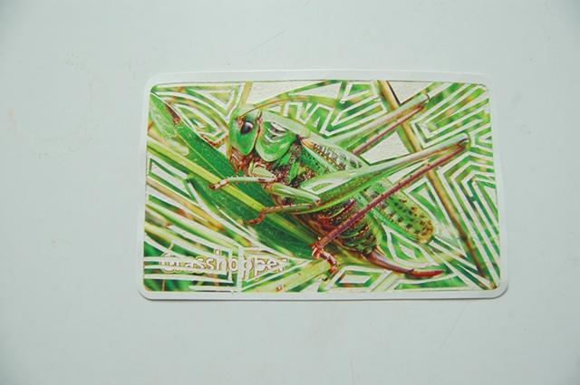 Grasshopper