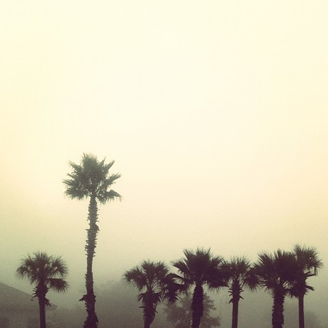 palm trees in fog austin texas