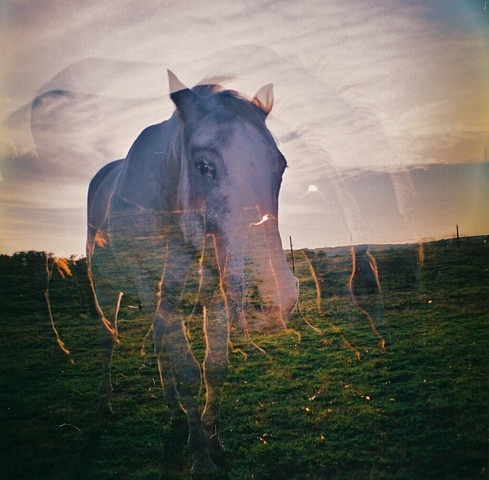 double exposure of a horse at sunset in the country in texas
