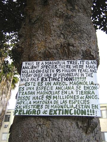 Magnolia Sign