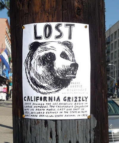 CALIFORNIA GRIZZLY (extirpated)