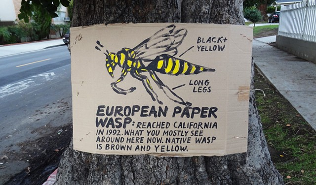 European paper wasp sign, Arden, hancock park