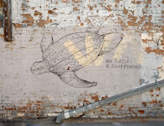 sea turtle sign, chalk sign, elkpen