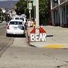 BEAR ON VINE
