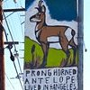 PRONGHORN ANTELOPE LIVED IN LOS ANGELES