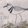 BIRDS OF THE LA RIVER