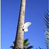 Tree Butterfly