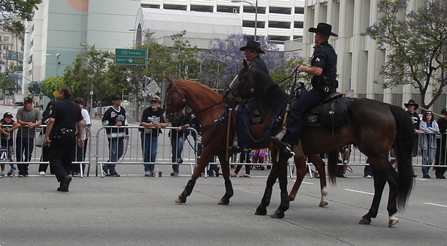 L.A.'s Finest...Mounted Police