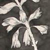 The Specimen (detail)