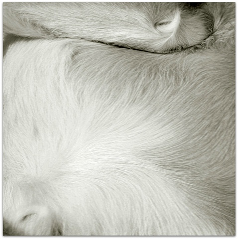 photograph of a dog fur by Hulya Kilicaslan