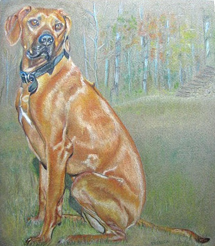 Soft pastel portrait of Rhodesian Ridgeback