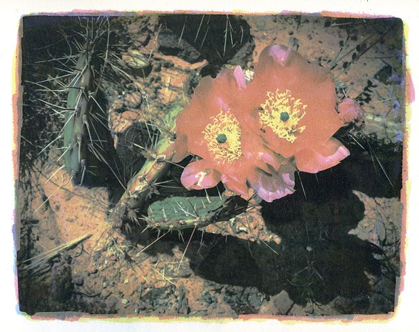 Gum Dichromate Photograph of Cactus Flower