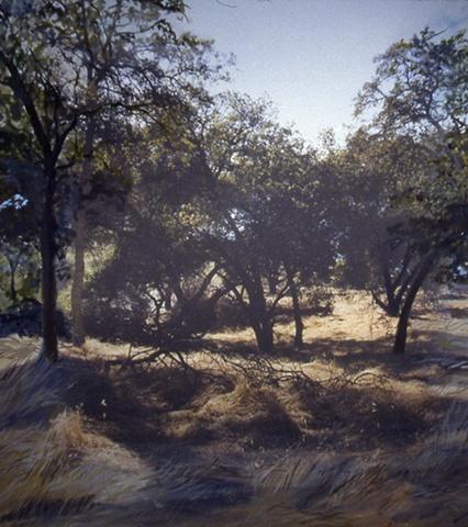 Folsom Foothills #4