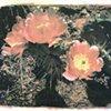 Desert Flower #2
