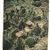 Desert Flower #6
