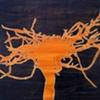 Midnight Tree- Root