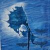 Blue Sunflower