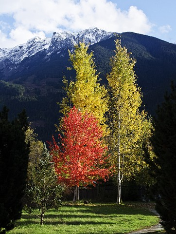 fall, colours, autumn, trees, nature