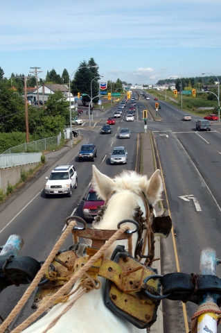 Horse on Highway