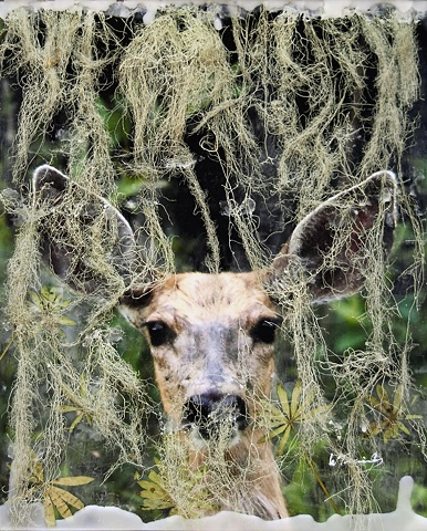 Deer, lichen, encaustics