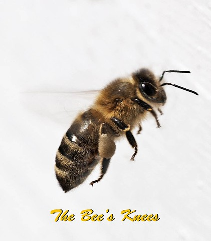 bee, knee, nature, proverb