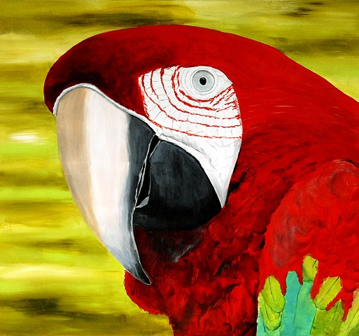 Red-and-green Macaw  -  Ara chloropterus, Brazilian parrot