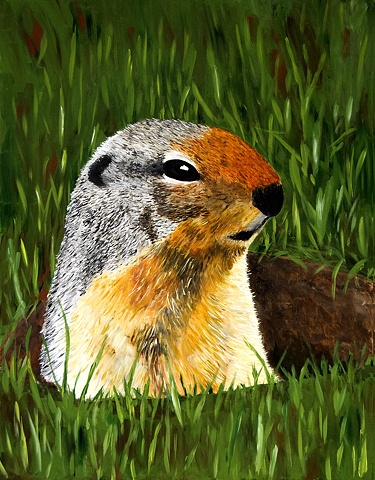 Close-up of a ground squirrel