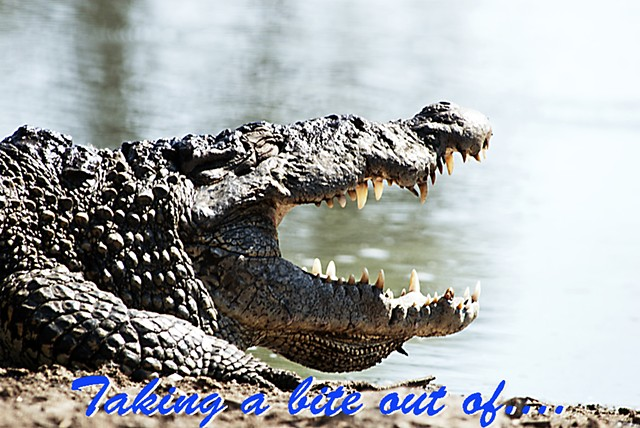 Proverb, crocodile, saying