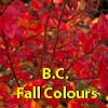 BC Fall Colours