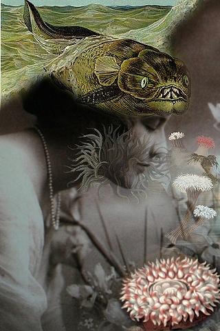 anemone mine