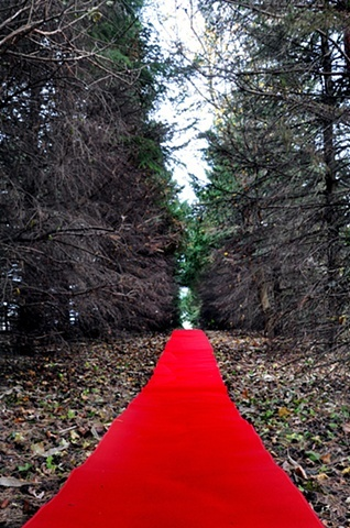 Pine Allée Walk