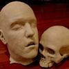Head & Skull
