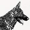 The Woodcut Dog
