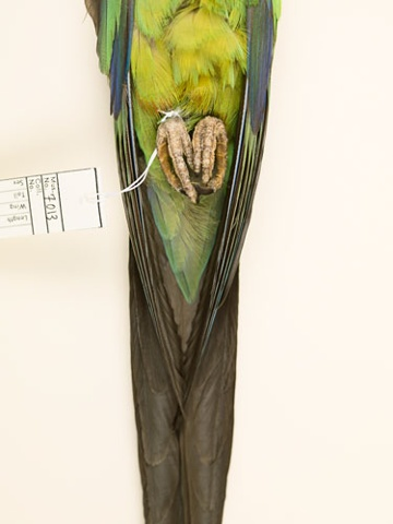 bird parrot taxidermy photography danielmortensen art artphotography