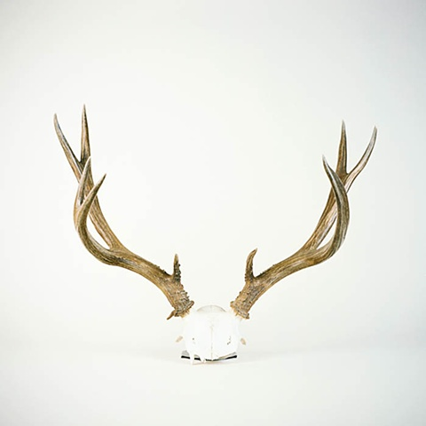 Antlers No. 1