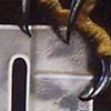 Ira Jones Mural 2 - Claw Detail