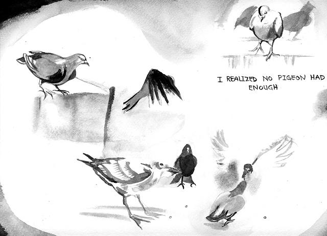 Scarcity, pigeons.