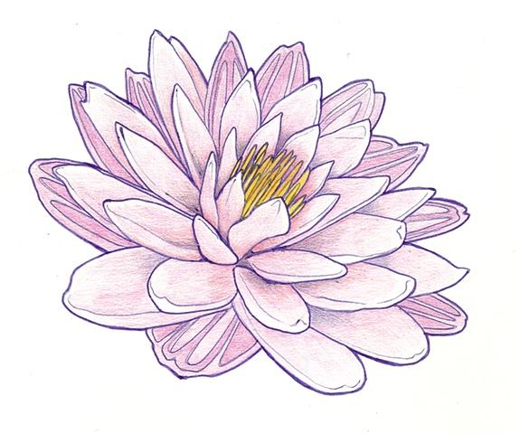 World View Magazine: Lotus