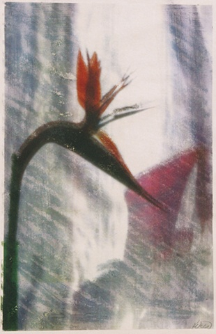 Bird and Nectar