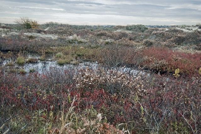autumn, Martha's vineyard