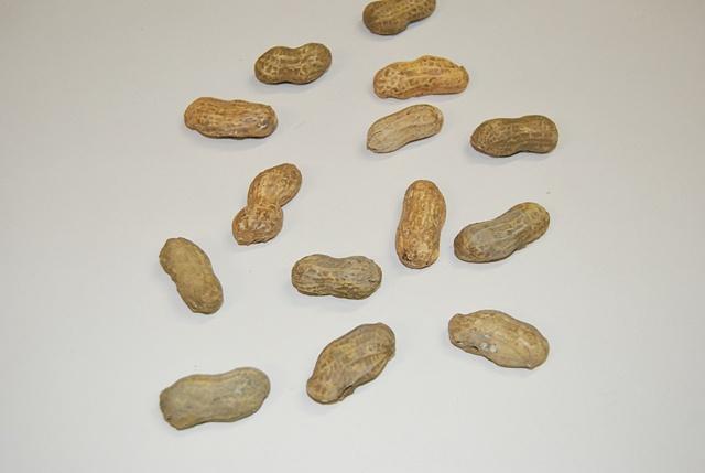 Scott Wolniak, Peanuts