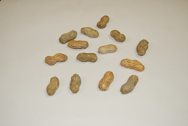 Scott Wolniak, Peanuts 2