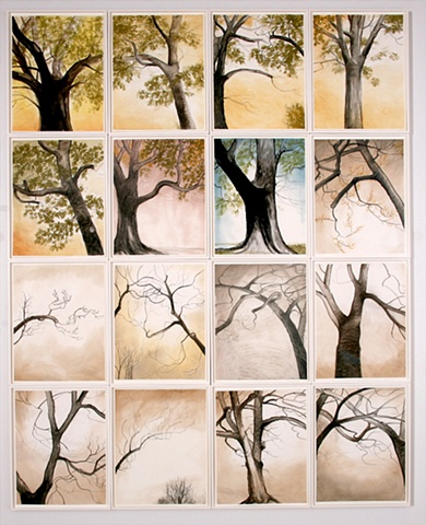 Silver Maple Study Series 2005-2006