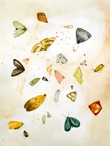 a gathering of moths, watercolor, pencil on paper